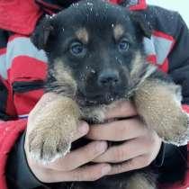 Продам собаку, в г.Астана