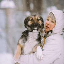 Веселая собачка мелкого размера, в Санкт-Петербурге
