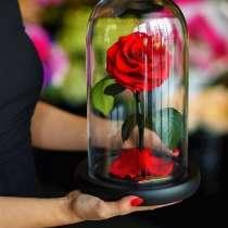 Роза в Колбе, в Москве