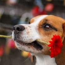 Дрессировка собак, в Химках