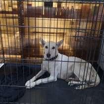 Собака Белка,3 года, стерильна. очень добрая, в Новороссийске