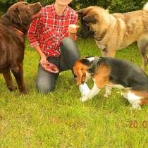 Гостиница для собак, в Рязани