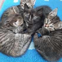 Котята от крысоловки, в Брянске