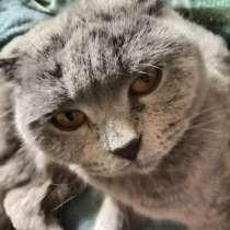 Отдам котят в добрые руки, в Туле