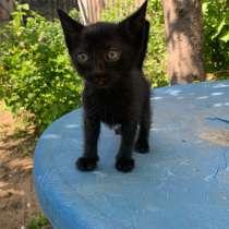 Котята, в Энгельсе