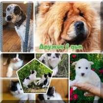 Собаки и щенки, кошки в добрые руки, в Москве