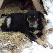 Добрые собаки ищут дом, в Оренбурге