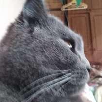 Отдам очень хорошую британскую кошечку, в г.Одесса