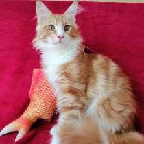 Продаю котика Мейн-Кун, в г.Темиртау