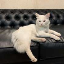 Красивый, молодой котик ищет хозяина, в г.Констанца