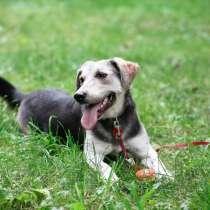 Мягкая Лея - собака с удивительной шерсткой, в Санкт-Петербурге