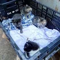 Миленькие котятки, в Ярославле