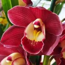 Орхидеи и антуриумы почтой по России, в Барнауле
