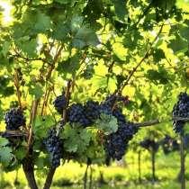 Виноградный сок, в Гулькевичах