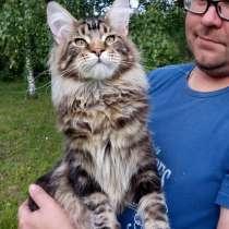 Мейн кун кот, в Ярославле