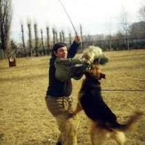 Обучаю собак по ЗКС и ОКД профессионально, в Краснодаре
