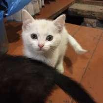 Отдам котят в добрые руки, в Коломне