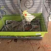 Птицы, в Ивантеевка