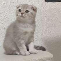Продам шотландские котята, в г.Кирьят-Моцкин