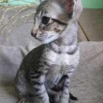 Продаються котята, в г.Петропавловск