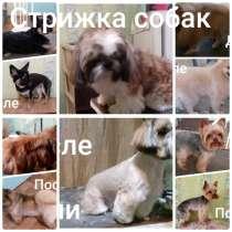 Груминг домашних животных, в Усть-Илимске