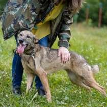 Кортни - милая небольшая собачка бесплатно в добрые руки, в Москве