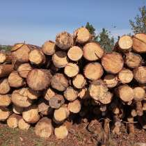 Лес-кругляк сосна и ольха пиловочник диаметр от 18 (зеленка), в Воронеже