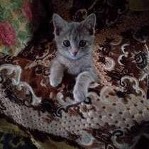 Отдам котенка в очень Добрые руки!!!, в г.Бишкек