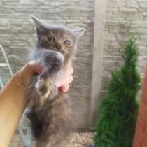 Отдам котят, в г.Брест