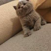 Британские котята, в г.Актобе