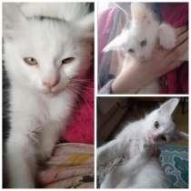 Отдам котенка турецкий Ван, в г.Мариуполь