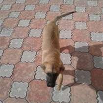 Подарим умную, красивую, собачку (возрасмесяца 4), в Красноярске