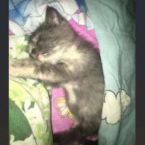 Котенок девочка, в Магнитогорске
