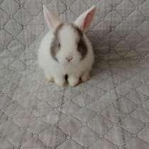 Продам дикоротивного кролика с клеткой, в Сергиевом Посаде