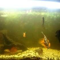 Аквариум с рыбами, в Екатеринбурге