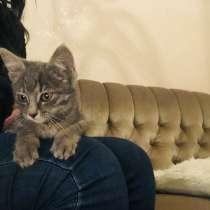 Отдам котёнка в добрые руки;), в г.Тбилиси