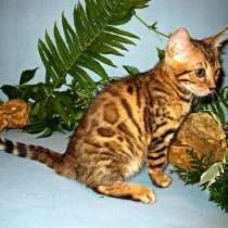Бенгальский котенок из питомника, в Москве