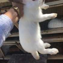 Кролики, в Тихорецке