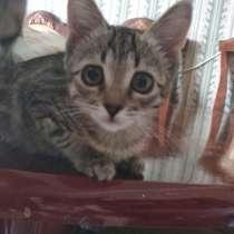 СРОЧНО отдадим 10 котят/кошек/котов (суммарно), в г.Ташкент