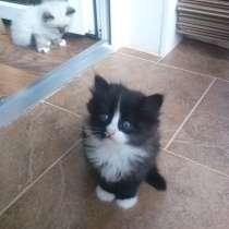 Продам котят, в Балашихе