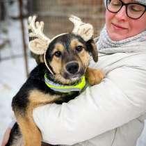 Чудесный щенок Бемби ищет семью!, в Москве