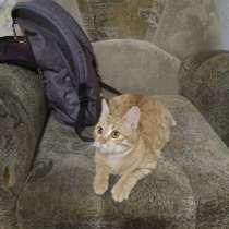Рыжий котенок в тёплый дом и добрые руки, в Тимашевске