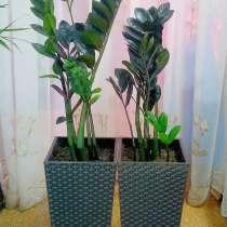 Напольные комнатные растения, в Челябинске
