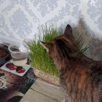 Отдам кошку даром, в Самаре