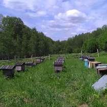 Мед разнотравье, в Бийске