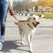Выгул собак по городу Урай, в Урае