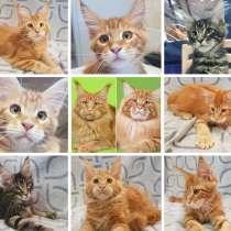 Продаются котята породы Maine Coon шоу-класса, 3-4 месяца, в г.Марибор