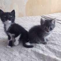 Отдам прекасных котят в добрые руки!!!!, в Новочеркасске