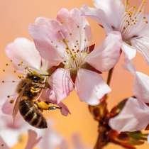 Пчелопродукты, в Пятигорске