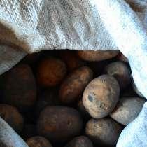 Продам картофель, в г.Чернигов